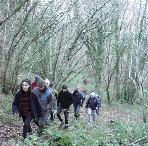 walkinwoods01